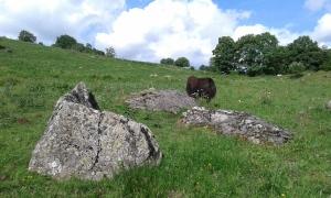 Stone Yak