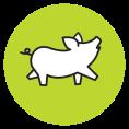 160628-sticker-varken-groen